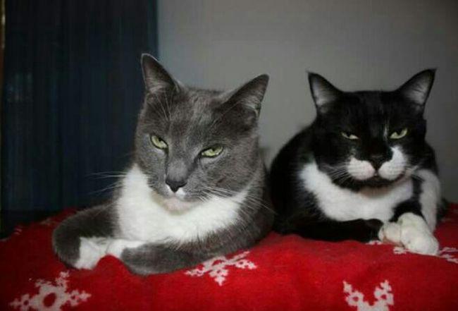 Handsome boys Brothers Handsome Boys Christmas Blanket Tom Sylvester❤ Kitty Love