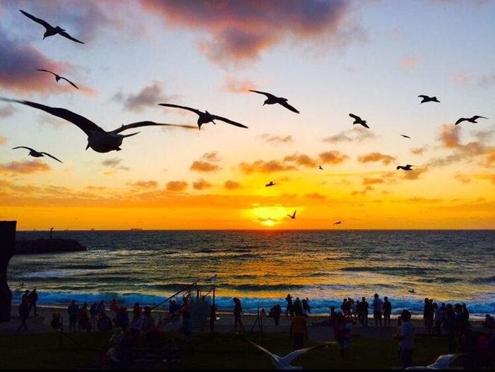 Respect For The Good Taste Eye4photography  IPhoneography Sunset Sunset_collection Sun_collection The Moment - 2015 EyeEm Awards Capturing Freedom