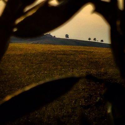 Ieri sera, tornando da tenutapianderna ..looks like #Tuscany, but here's much better! #lifelessordinary #lifeisbeautiful #sunset #olivetree #landscape #silhouette #italiancountryside #scandiano #igersreggioemilia #piandernagriwellness