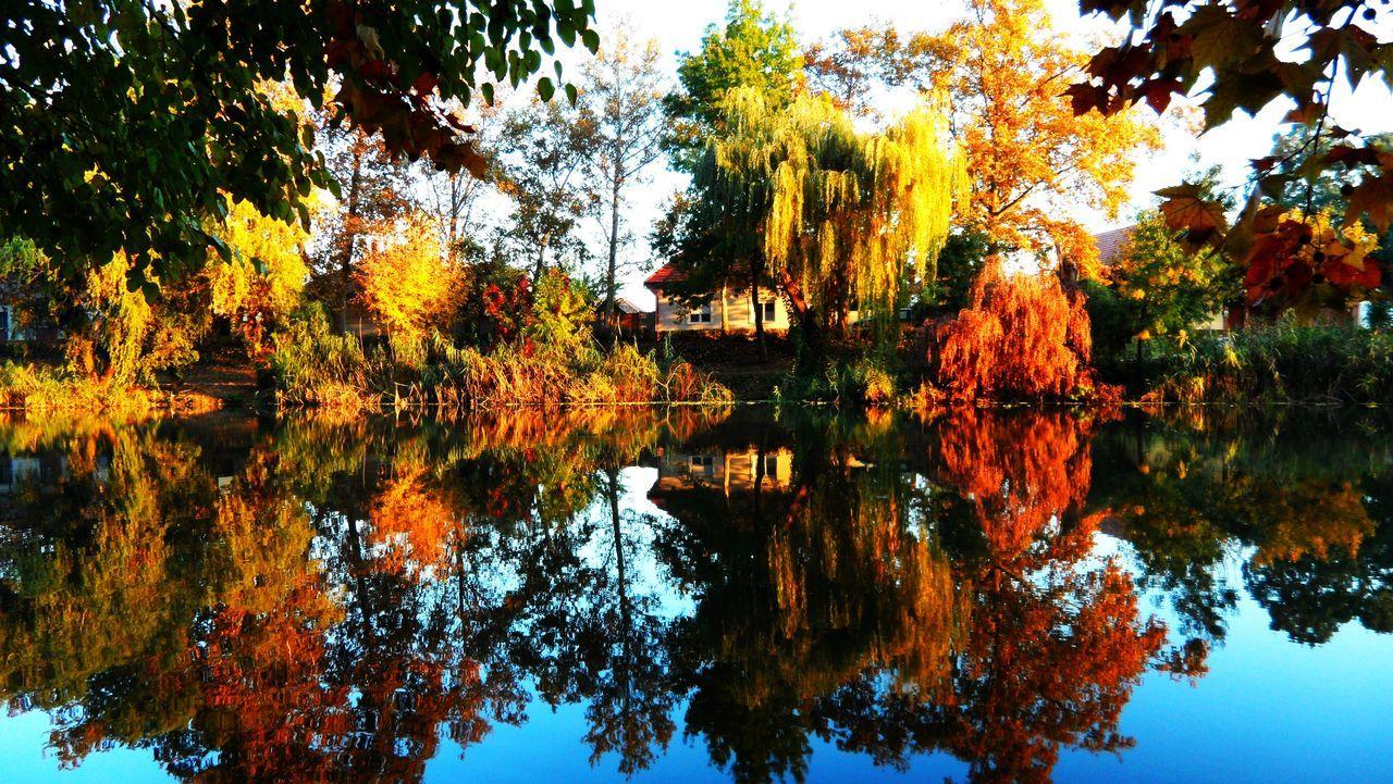 Autumn Autumn Colors Beauty In Nature Kurca No People Reflection Riverside Szentes Tree Water