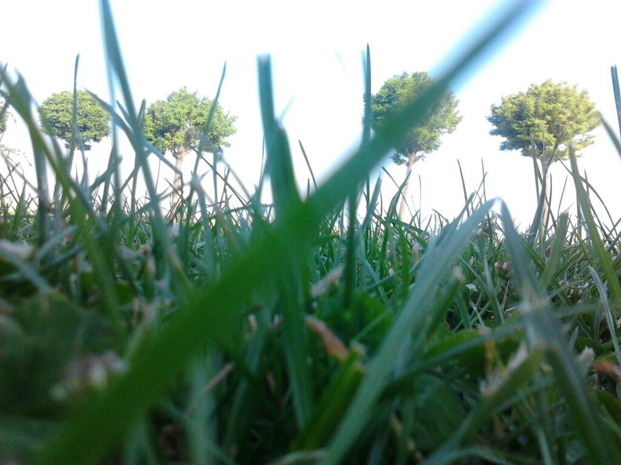 growth, grass, plant, nature, selective focus, green color, field, no people, beauty in nature, flower, day, outdoors, close-up, freshness, sky, fragility, snowdrop