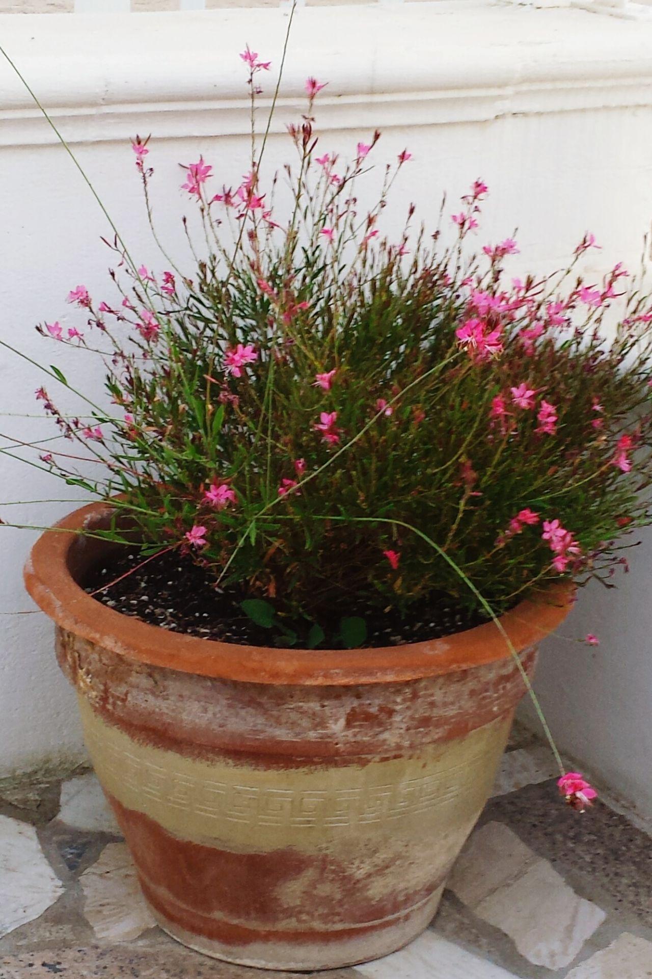 Flowers Pink Flower Terracotta Mediterran Mediterranean  Rosa Zart Blumen Nature Flowerpower Flower Collection Pastel Power Rosa Pink Pink Flowers