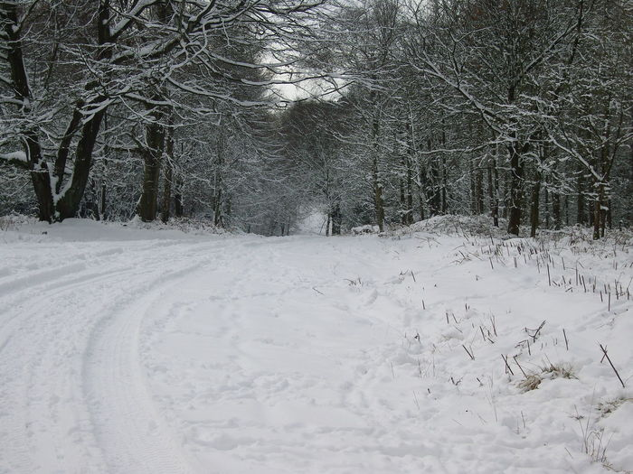 Beauty In Nature Cold Day In Woods Cold Day ❄ Cold Temperature Nature No People Snow Snow Forest Snow In Woods Snow Scene  Tire Track Tranquil Scene Tranquility Tree Winter Winter Scene