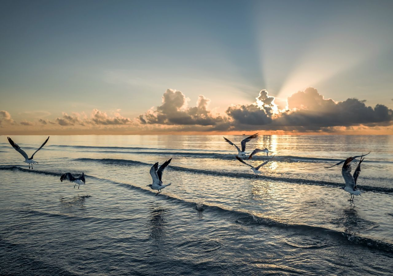 Sea Water Sunset Outdoors Sport Nature Sky Vacations Cloud - Sky Scenics Beach Sunrise Seagulls Birds Flight Birdsinflight Morning Morning Light Renewal  Flock Of Seagulls Beauty In Nature Ocean View Colorful Seascape The Great Outdoors - 2017 EyeEm Awards