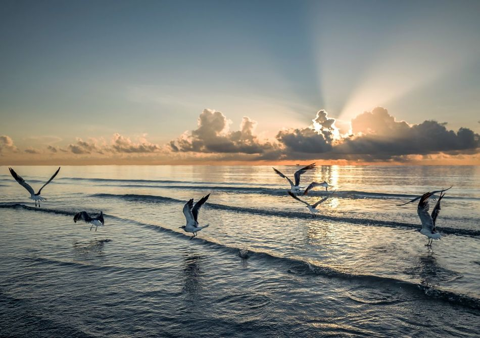 Sea Water Sunset Outdoors Sport Nature Sky Vacations Cloud - Sky Scenics Beach Sunrise Seagulls Birds Flight Birdsinflight Morning Morning Light Renewal  Flock Of Seagulls Beauty In Nature Ocean View Colorful Seascape