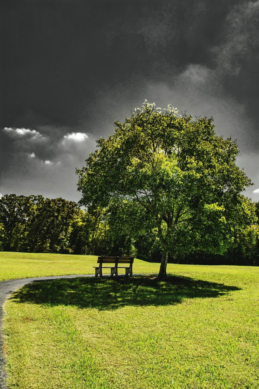tree, nature, green color, grass, growth, beauty in nature, tranquility, tranquil scene, cloud - sky, scenics, day, sky, no people, outdoors, field, park - man made space, landscape, animal themes