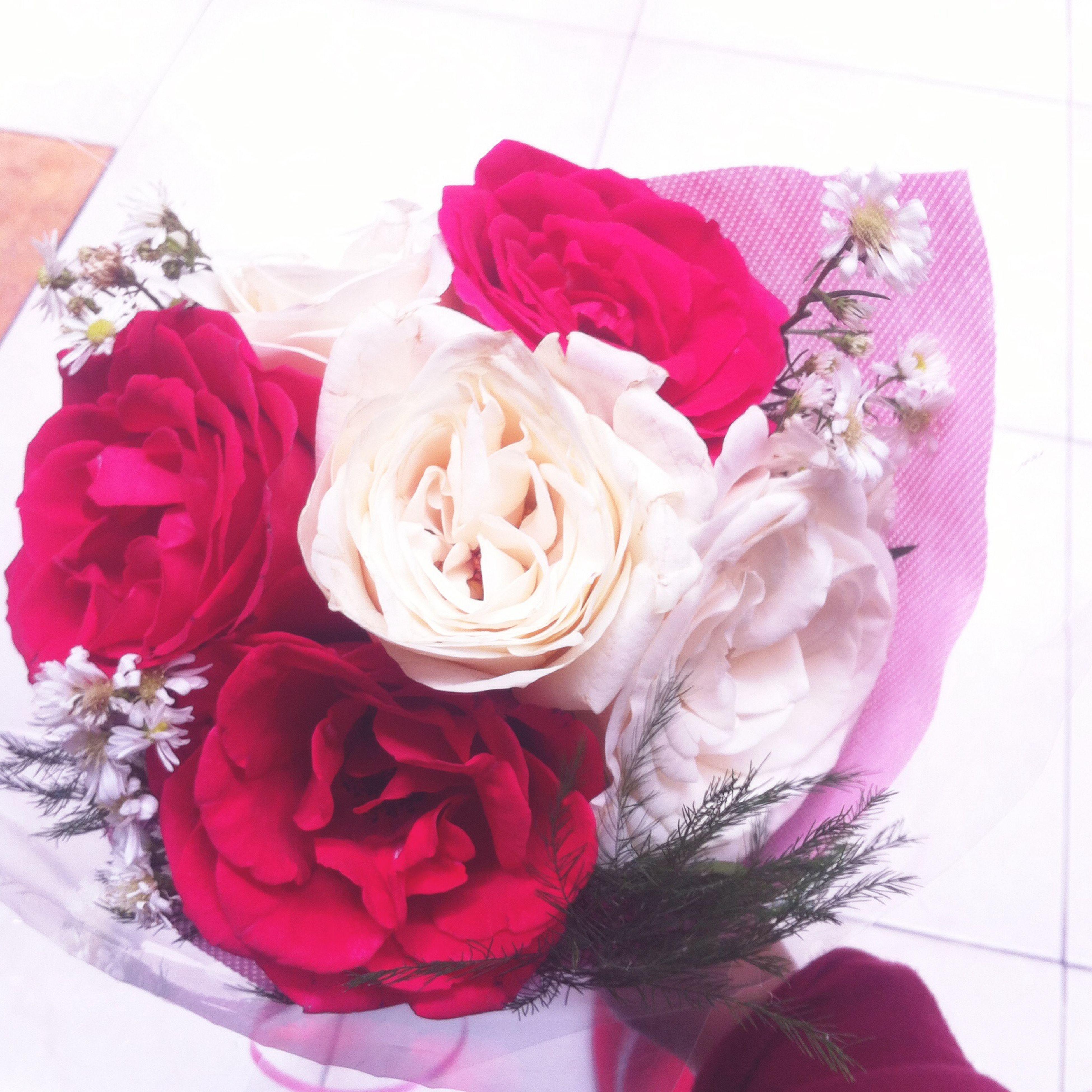 flower, indoors, rose - flower, petal, freshness, bouquet, red, fragility, decoration, vase, pink color, flower head, white background, close-up, rose, bunch of flowers, wall - building feature, flower arrangement, studio shot, home interior
