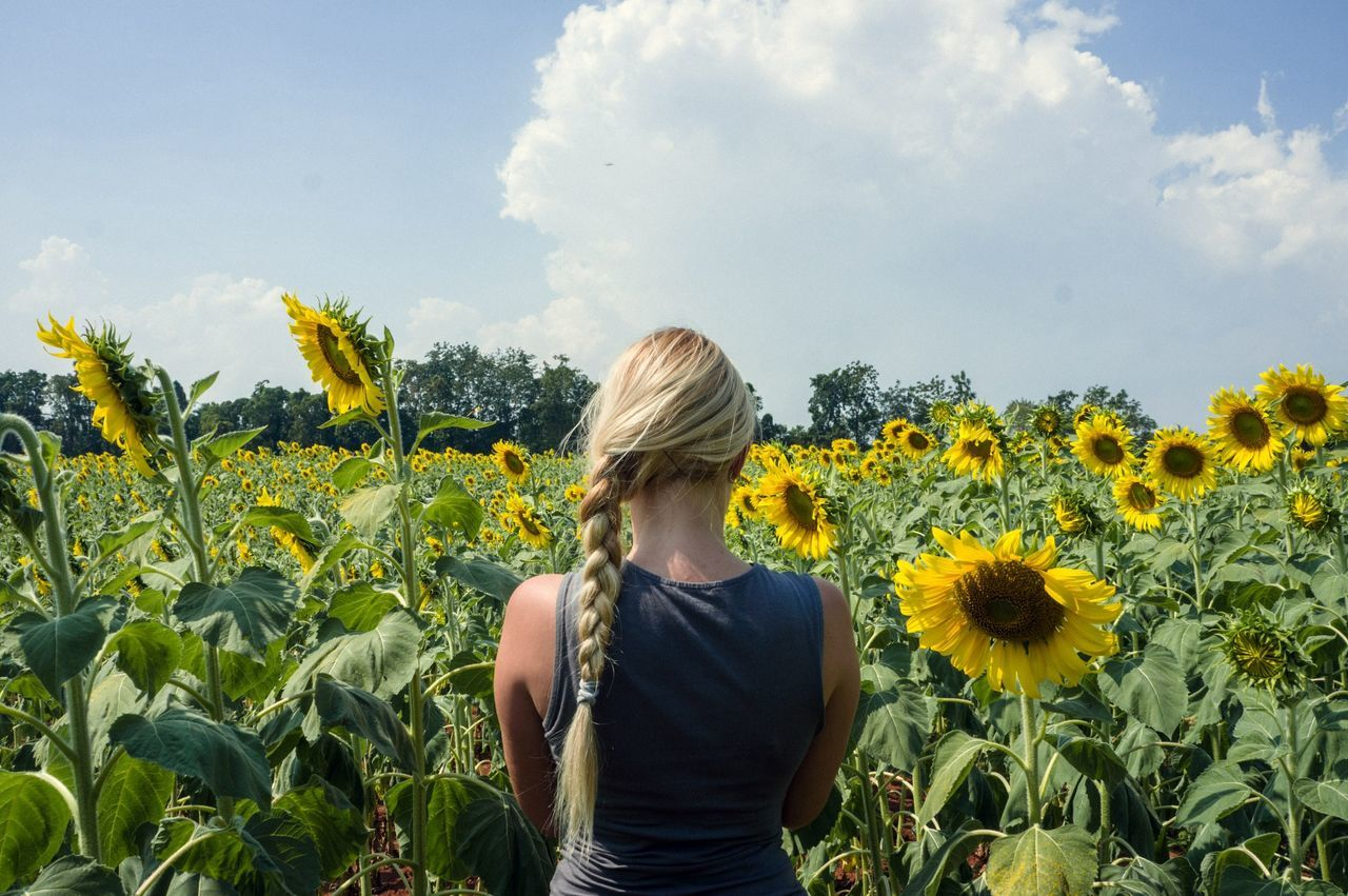 Beautiful stock photos of sunflower, Agriculture, Beauty In Nature, Casual Clothing, Cloud - Sky