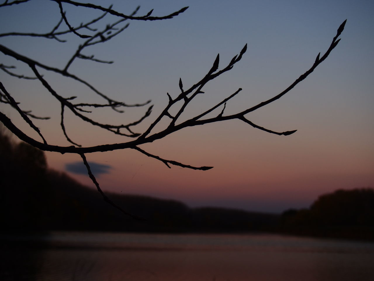sunset, silhouette, nature, beauty in nature, sky, tree, tranquility, scenics, outdoors, tranquil scene, no people, branch, moon, bird, day