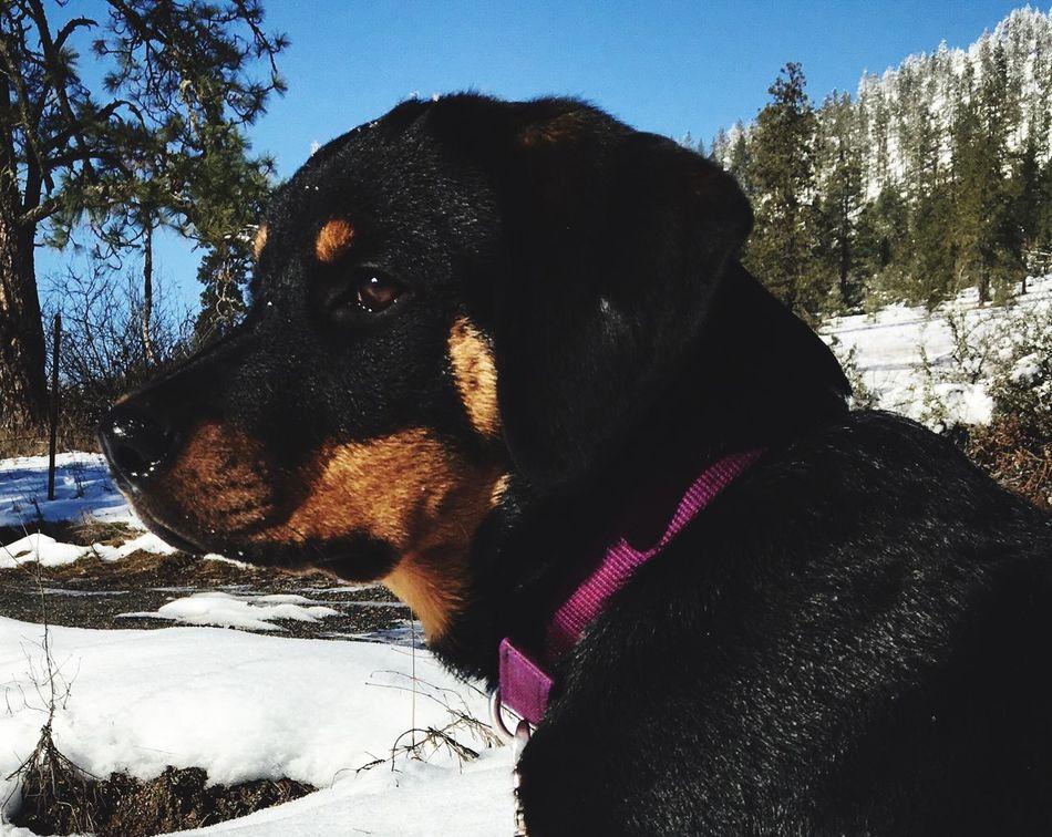 My puppy, Piper.