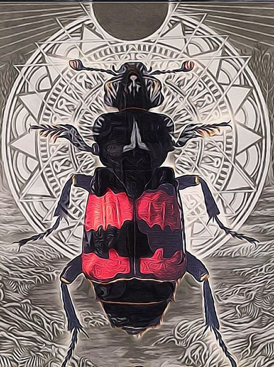 The Insectoids Are Not Interested... Shake The Shackles Of Your Mind Photographic Approximation Find Out For Yourself Try To Remember The Truth Of The Matter Is...