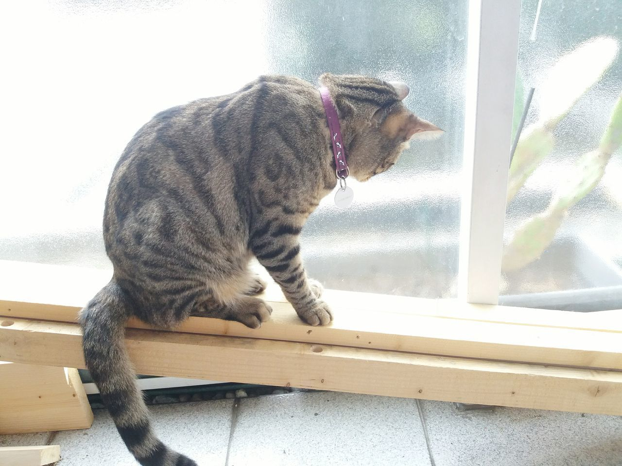 one animal, animal themes, pets, domestic cat, mammal, domestic animals, window, day, window sill, feline, no people, side view, sitting, indoors, full length, close-up