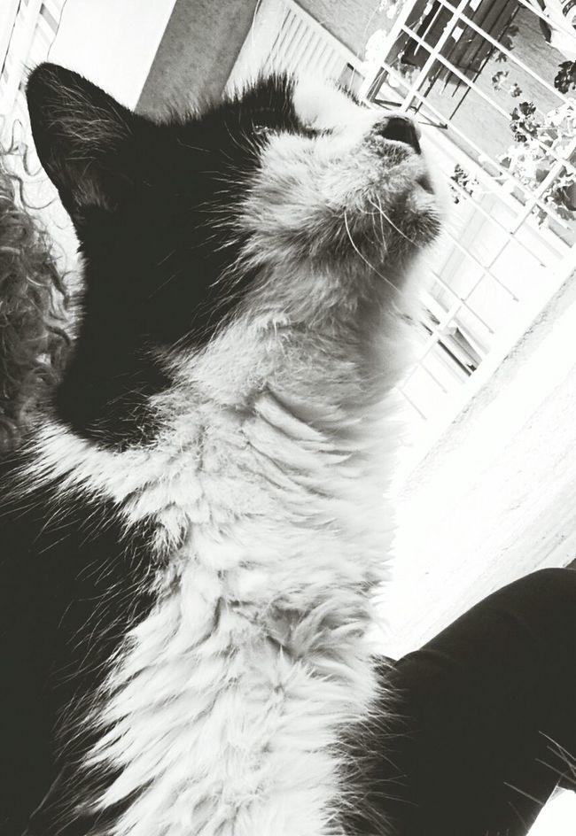 105 anni di gatto.