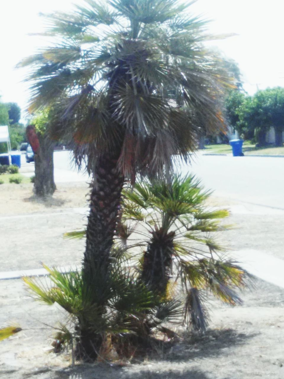 growth, nature, tree, palm tree, outdoors, day, no people, beauty in nature, close-up, sky