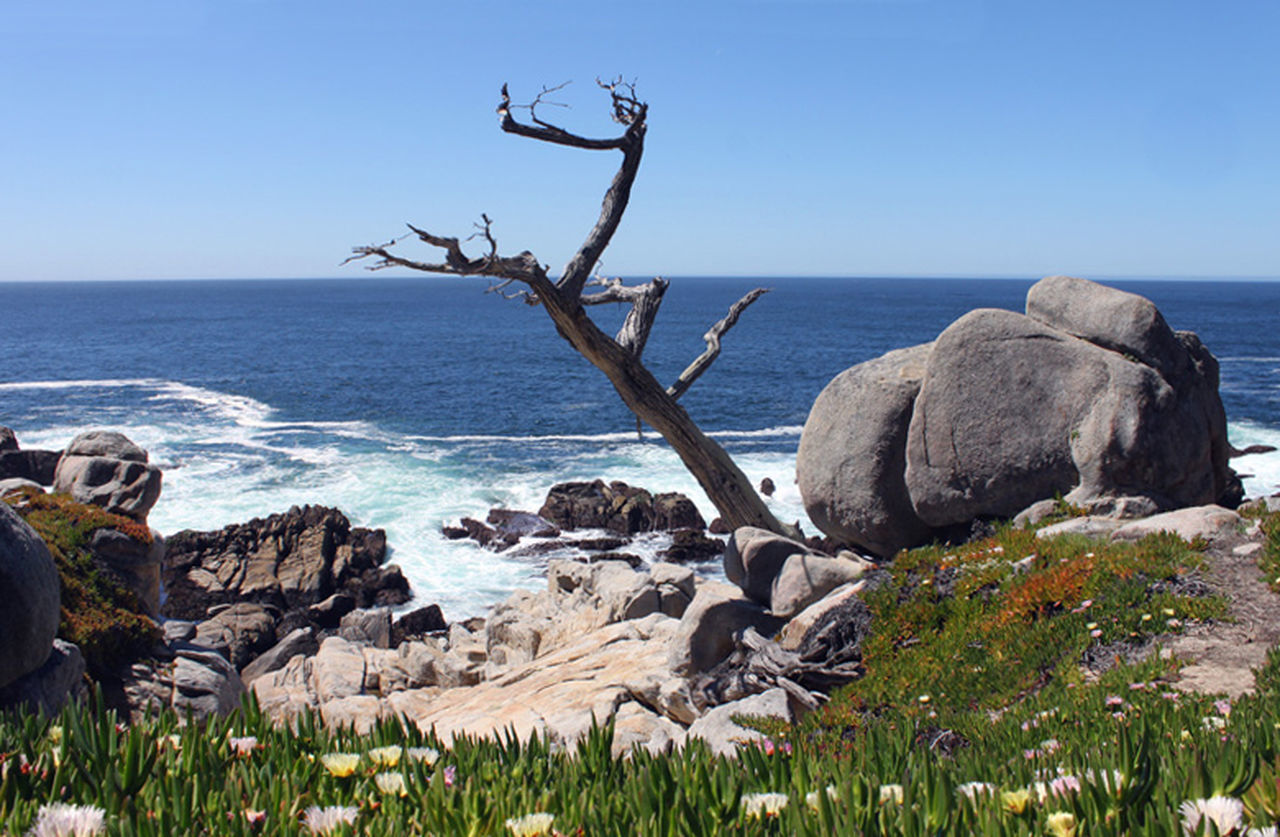 17-Miles Drive zwischen Monterey und Pebble Beach 17 Mile Drive Horizon Over Water Idyllic Monterey Bay Pebble Beach Plant Rock Rock - Object Sea The KIOMI Collection USA Water 17-Mile Drive