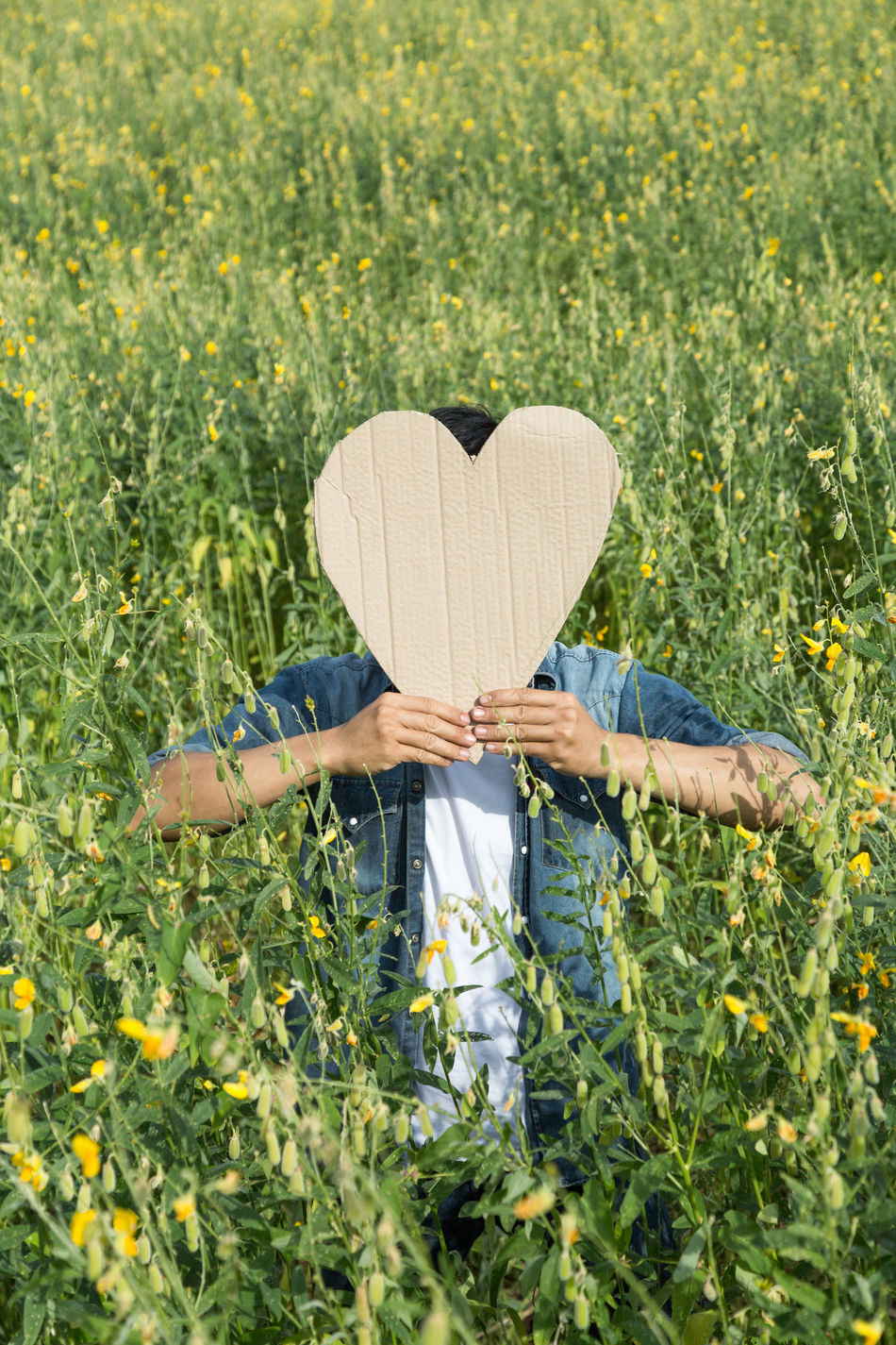 Beautiful stock photos of valentinstag, Abundance, Agriculture, Beauty In Nature, Covering