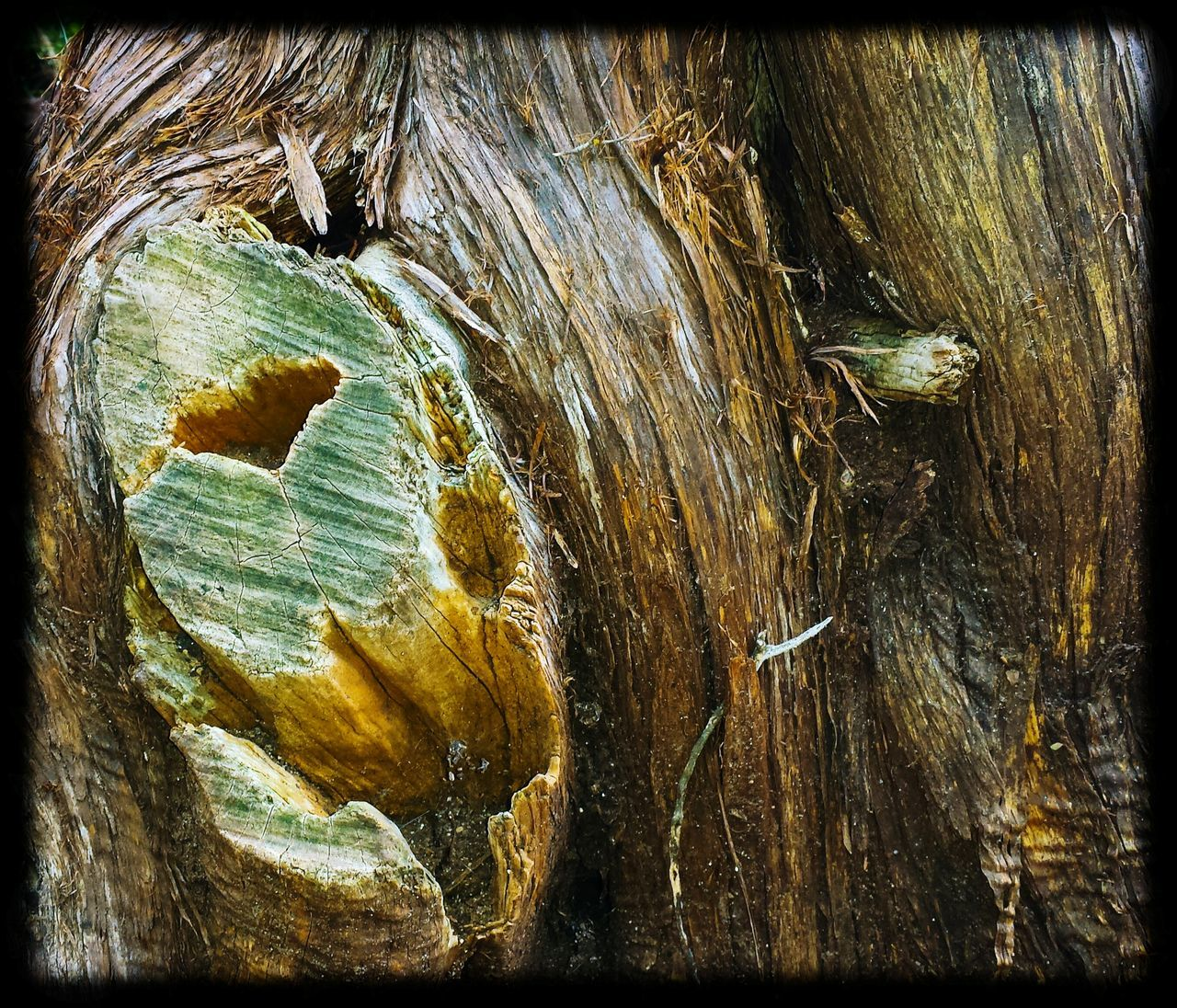 no people, close-up, day, nature, tree trunk, textured, outdoors, tree
