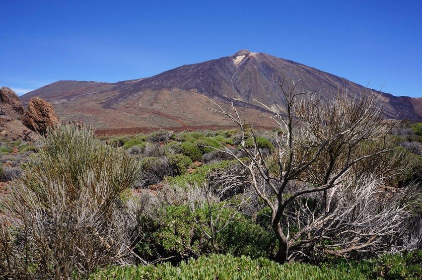 Blue Plant Mountain Outdoors Clear Sky No People Nature Scenics Tree Sky Day Tenerife Beauty In Nature Nature Landscape Volcano Teide National Park