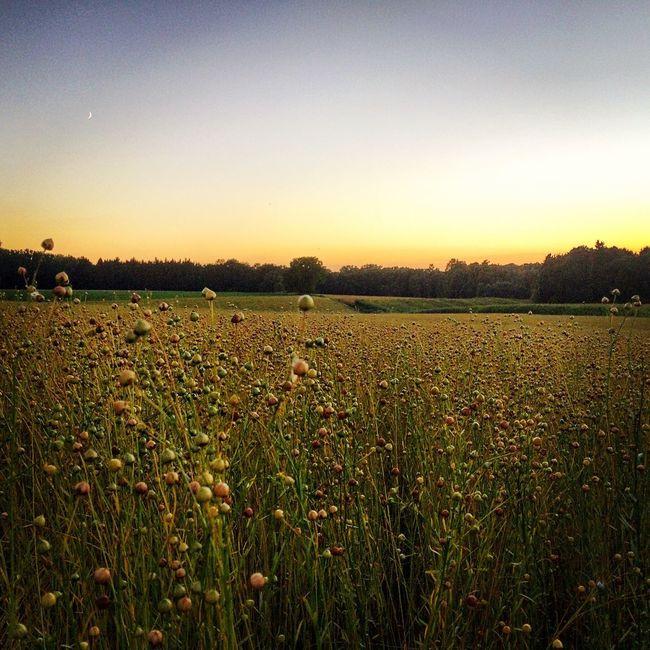 Belgium Fields Fieldscape Sunset