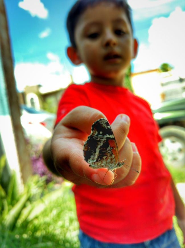Mariposa Monarca  Mariposa Respeta La Naturaleza Respeta La Vida Vida Naturaleza Niñosfelices Butterfly