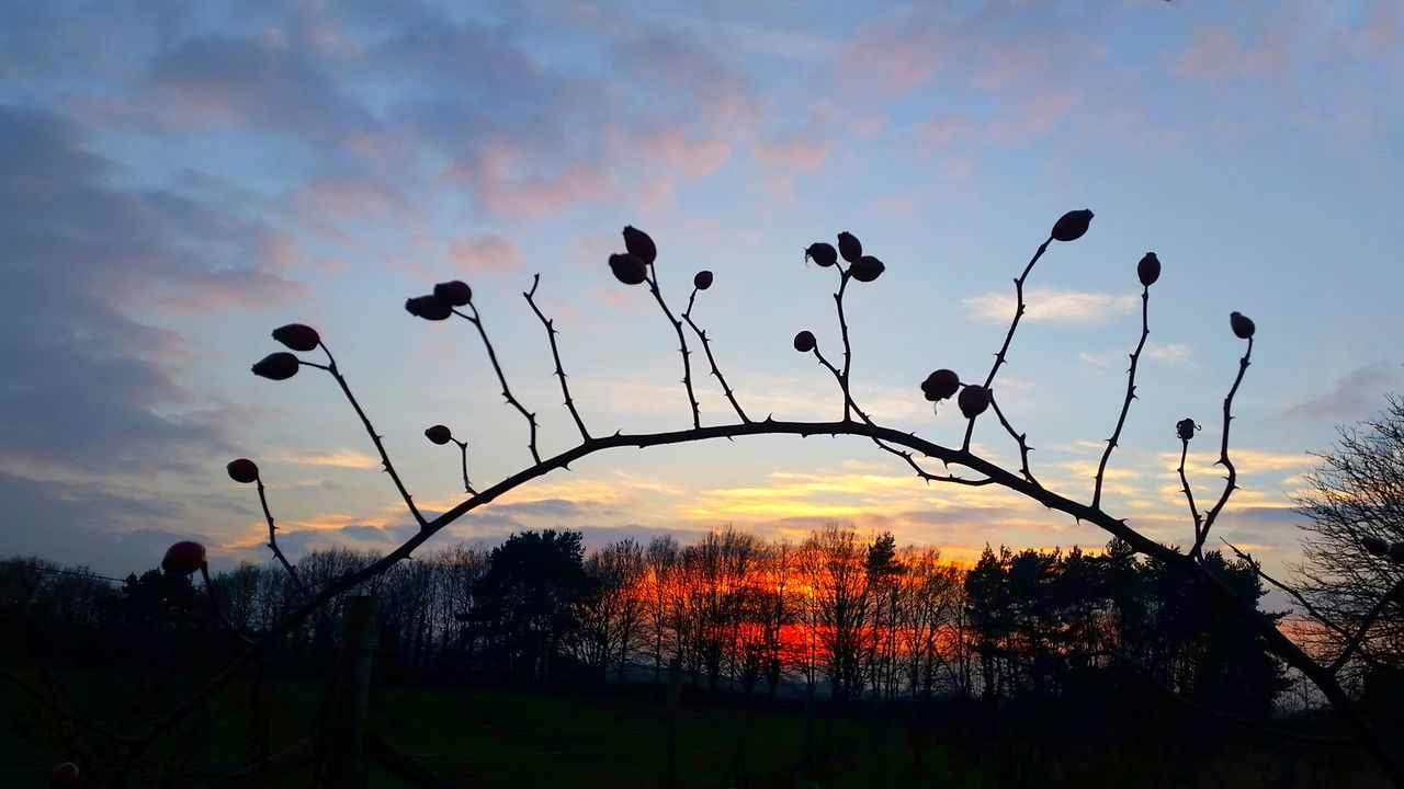 """'Rose Hips against Winter Sky' .....Here's a link to a beautiful Celtic version of one of my favourite Christmas Carols 👉 https://youtu.be/ITIaYoWCPkE 🎄I hope you enjoy. 🙏 ...and another link to this year's John Lewis Christmas advert. 😄👉 https://youtu.be/sr6lr_VRsEo 🐕 (Buster the Boxer & the Trampoline) 😍 ...I'm so busy that I have been unable to follow your galleries very much; (also my EE account has suddenly become very glitchy) ...In case I don't get another opportunity (before the 25th) I wish all my friends & followers a peaceful and joy-filled Christmas. Thankyou from my heart for your support, comments ...and mostly, for understanding! This post is my way of saying """"Thankyou, I truly appreciate your support, and send love & best wishes. Sunset Dusk Silhouette Eyeemphotography Love Without Boundaries Exceptional Photographs My Cloud Obsession☁️ EyeEm Best Shots - Landscape EyeEm Masterclass Landscape_Collection EyeEm Best Shots - Nature EyeEm Best Shots Rose Hip Tadaa Community Christmas Around The World Beautiful Nature Landscape Beauty In Nature Silhouette_collection Pastel Power Pastel Colors"""