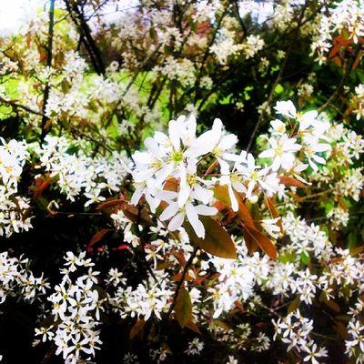 Kingsheathpark Spring Spring2014 Flowers Beauty Springwalk
