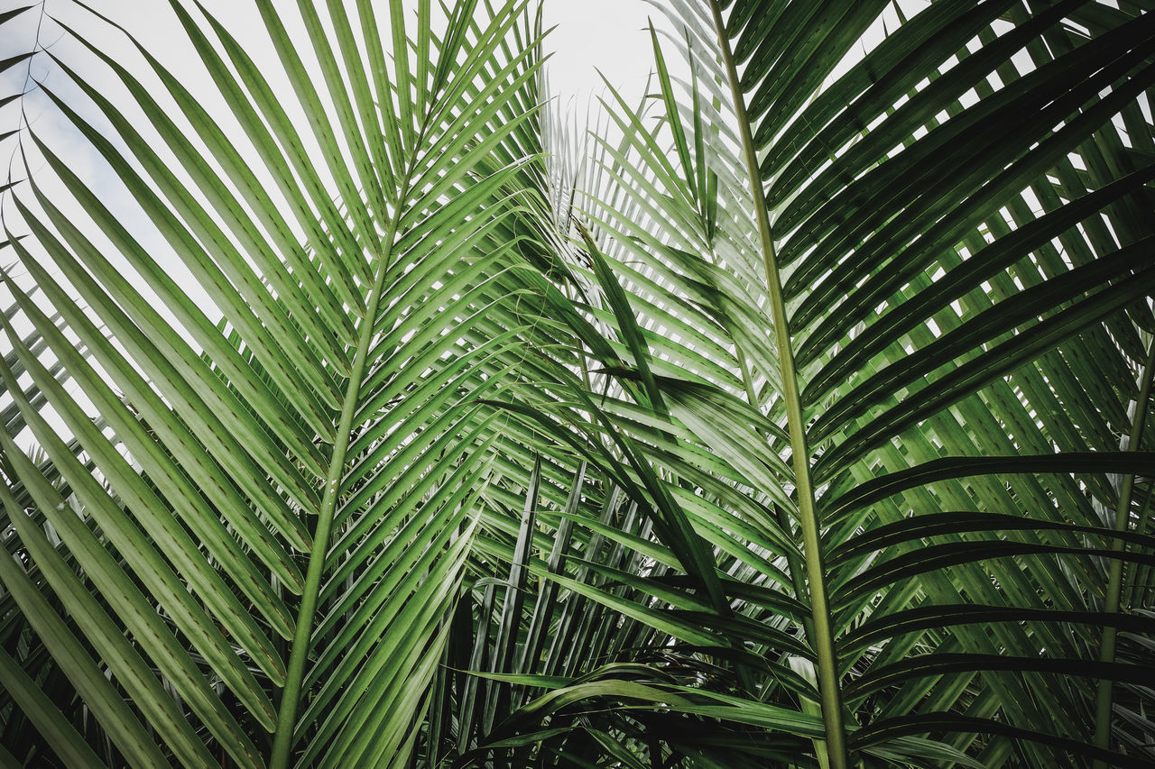 Beauty In Nature Close-up Day Freshness Green Color Leaf Low Angle View Nature No People Outdoors Pattern Pattern Pieces Tree Tropical Tropical Climate Wild Wildlife & Nature