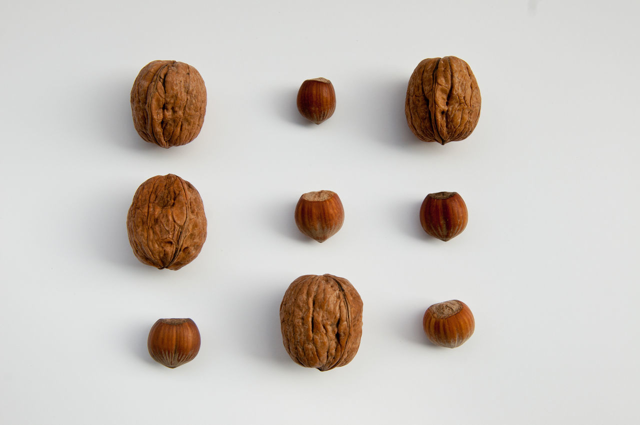 Play naturally. Autumn Background Brown Composition Food Game Hazelnut Healty Italia Italy Loser Natural Naturally Noci Number Nut Nuts Play Scoiattolo Squirrel Summer Three Tris Walnut White Background