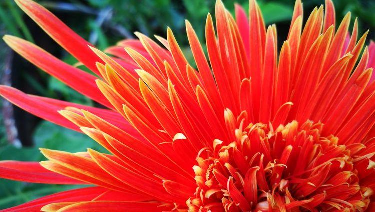 Flower Petal Fragility Nature Freshness