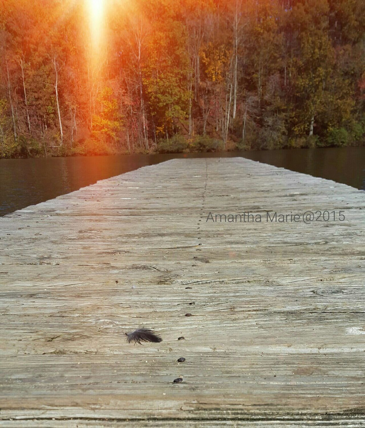 Peace And Quiet Lonely Objects Feather  Black Feather Boat Dock Lake View Sun Light Trees Water Wood Fall Colors