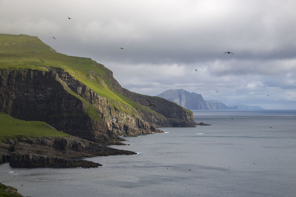 Islands Scandinavia Animal Themes Beauty In Nature Bird Cloud - Sky Faroe Islands Flying Island Large Group Of Animals Mountain Mountain Range Mykines Nature No People North Northsea Outdoors Puffins Scenics Sea Sky Tranquil Scene Tranquility Water