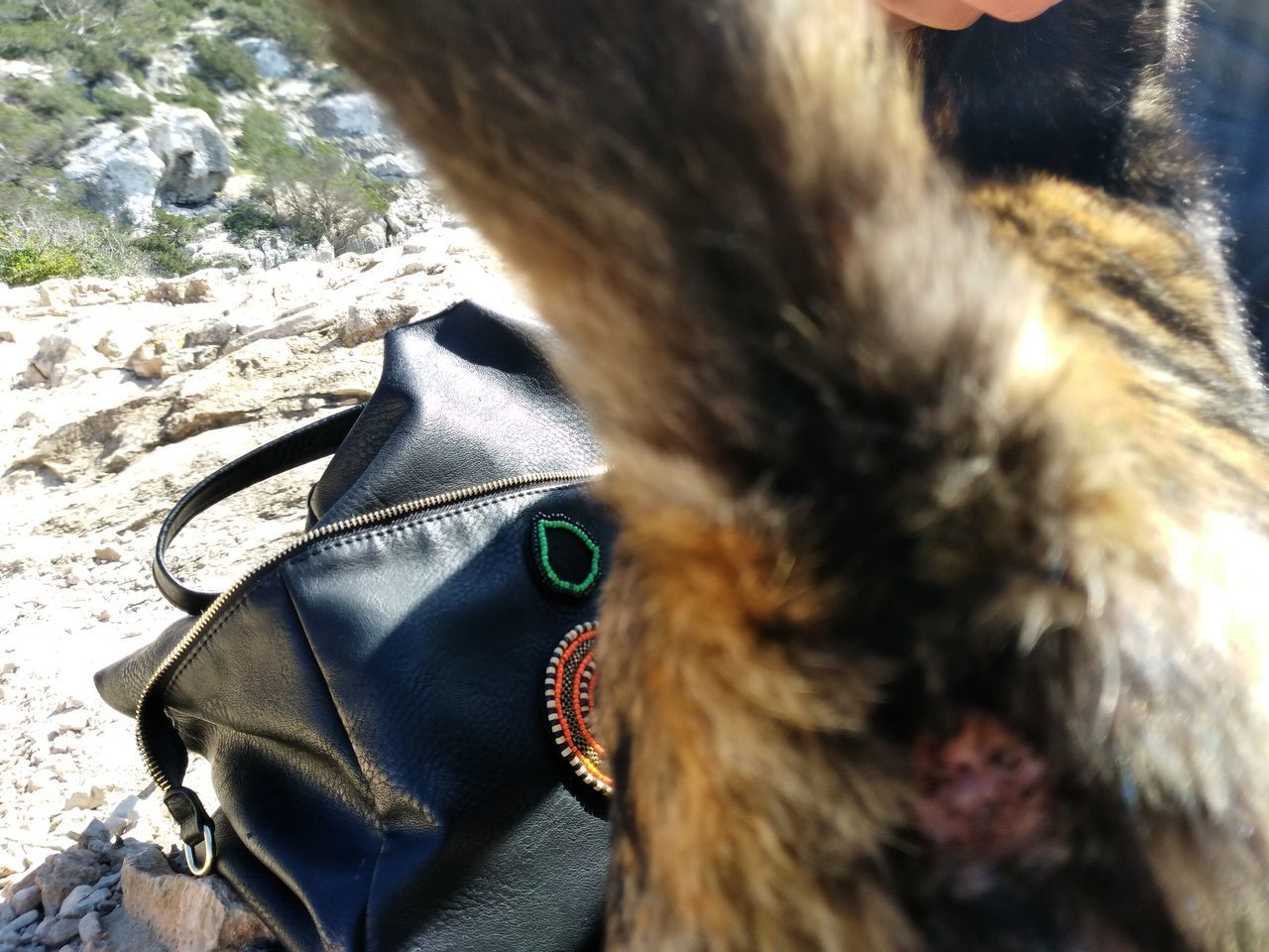 Now it's not at arty photo I share with you here it's just a bit of humour. Joking around while befriending a cat I took a picture of its arse.... Little did I know, it has human face for a bum hole Domestic Animals Outdoors One Animal Human Body Part Animal Themes Adult Forever Alone Spooky Walking Around ArtWork Baleric Islands Its Me! Mymind Holes Bum Day  Bums Bum Life Cat Cats Of EyeEm Fur Furry Humanface In Prison Poor Cat Whatcanyousee