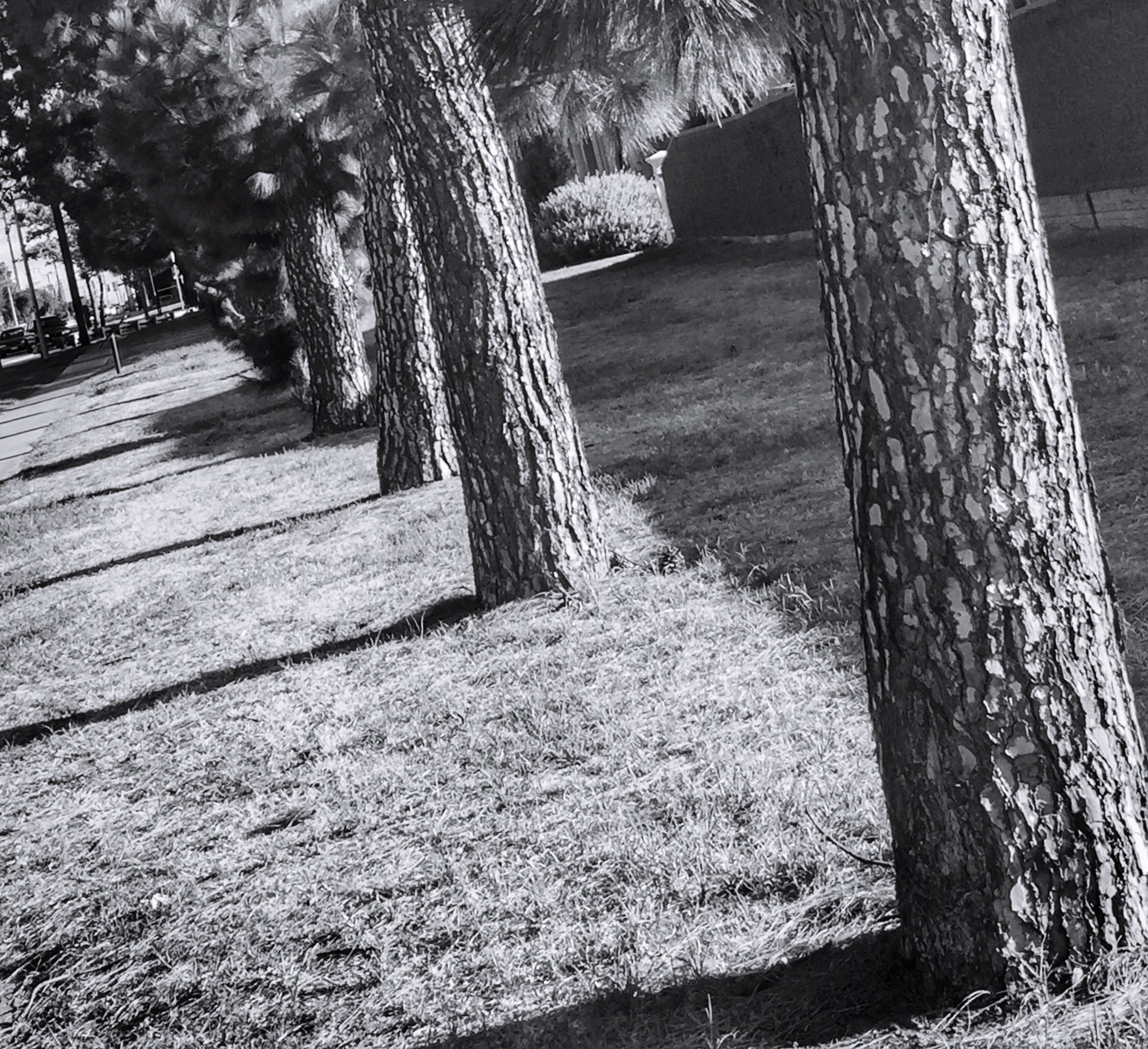 tree, tree trunk, shadow, sunlight, park - man made space, built structure, wood - material, footpath, day, growth, nature, the way forward, outdoors, steps, no people, architecture, stone material, tranquility, grass, walkway