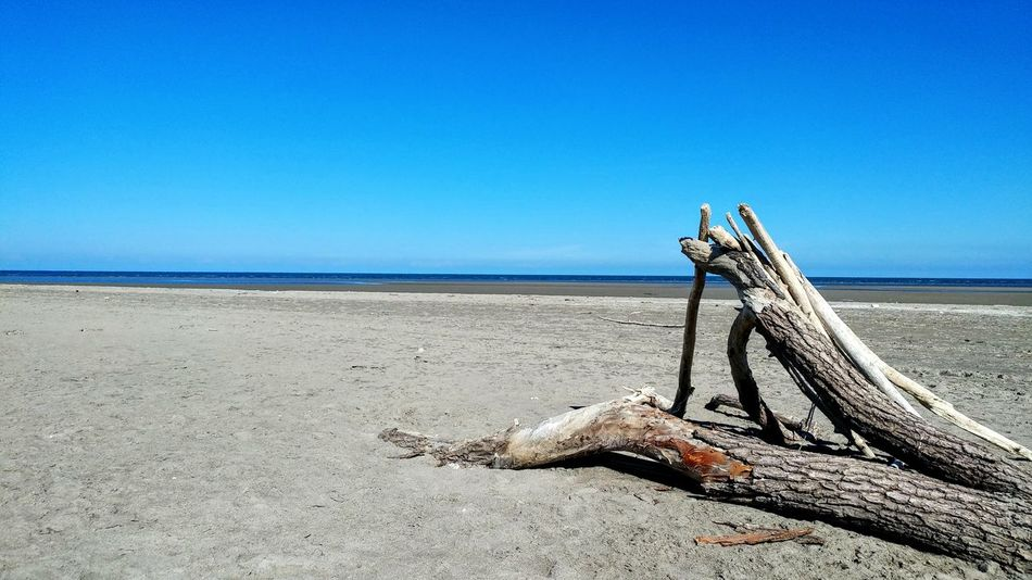 Sea And Sky Day Followme Photography Blue Sky Tree Photo Blue Sand EyEmNewHere Peaceful Place Chilling LGG5