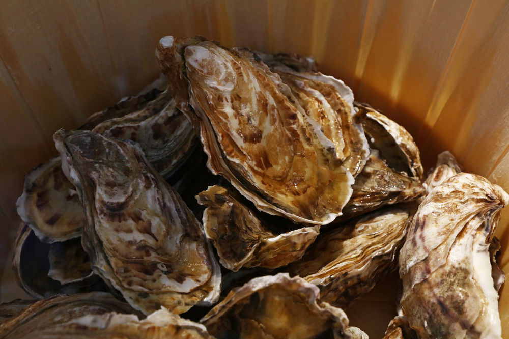 Fresh catch of oysters in wooden bucket Bucket Catch Catch Of The Day Close-up Day Delicacy Farm Fishermanvillage Food Fresh Fresh Catch Indulgence Ingredients Market Nature Oyster  Oyster Time Oysters Retail  Retail Display Seafood Shell Store Time Wooden