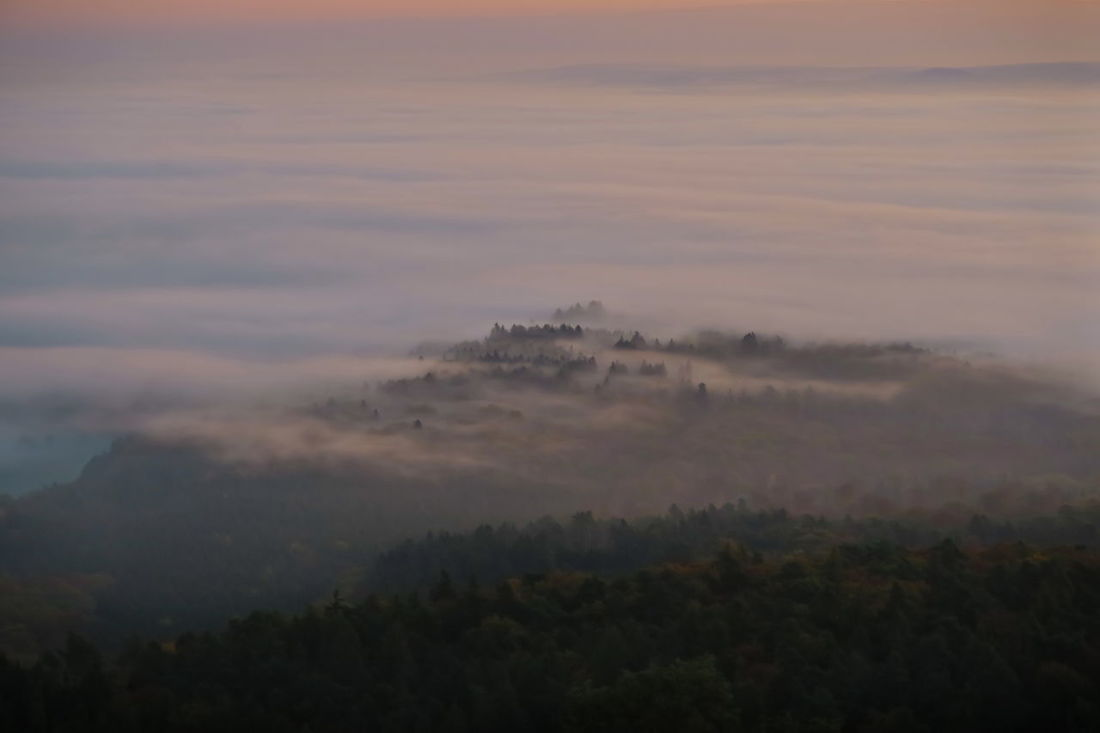 Beauty In Nature Cloud - Sky Day Fog Foggy Morning Forest Hazy  Idyllic Landscape Mountain Nature No People Outdoors Scenics Sky Sunrise Sunrise_sunsets_aroundworld Sunriseovertheclouds Sunset Tranquil Scene Tranquility Tree