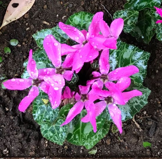 High Angle View Pink Color Fragility Beauty In Nature Water Blooming Wreath