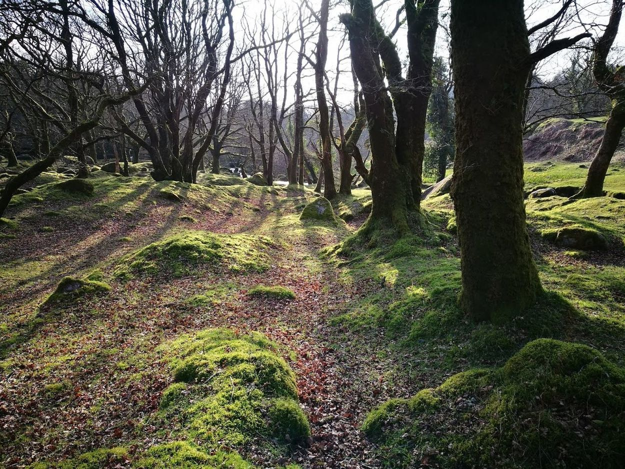 Forrest Beauty In Nature Burrator Burrator Reservoir Day Forest Hiking Landscape Lush - Description Nature No People Outdoors Tree Tree Area