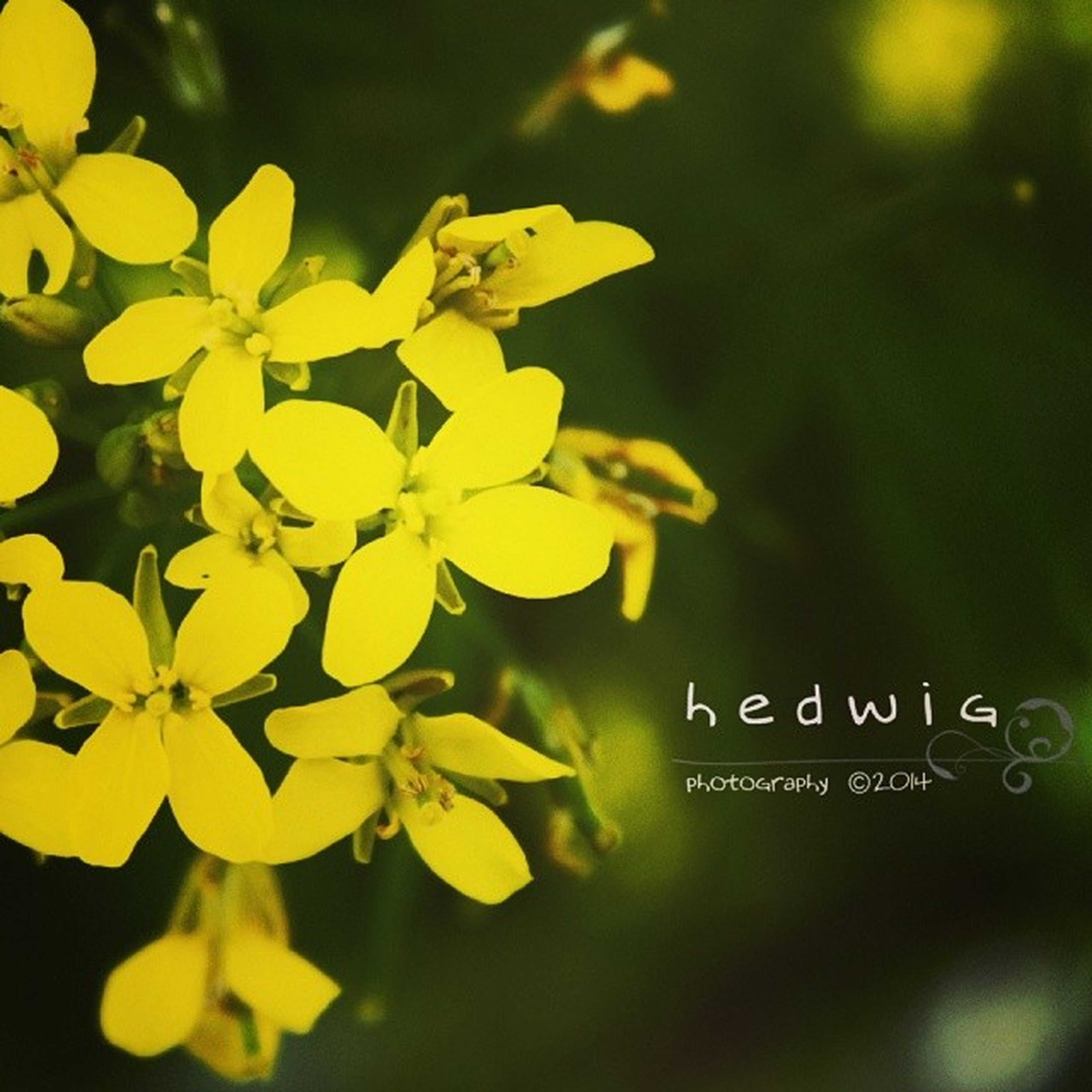 yellow, flower, focus on foreground, close-up, growth, freshness, selective focus, petal, beauty in nature, fragility, nature, plant, day, outdoors, flower head, text, no people, blooming, western script, stem