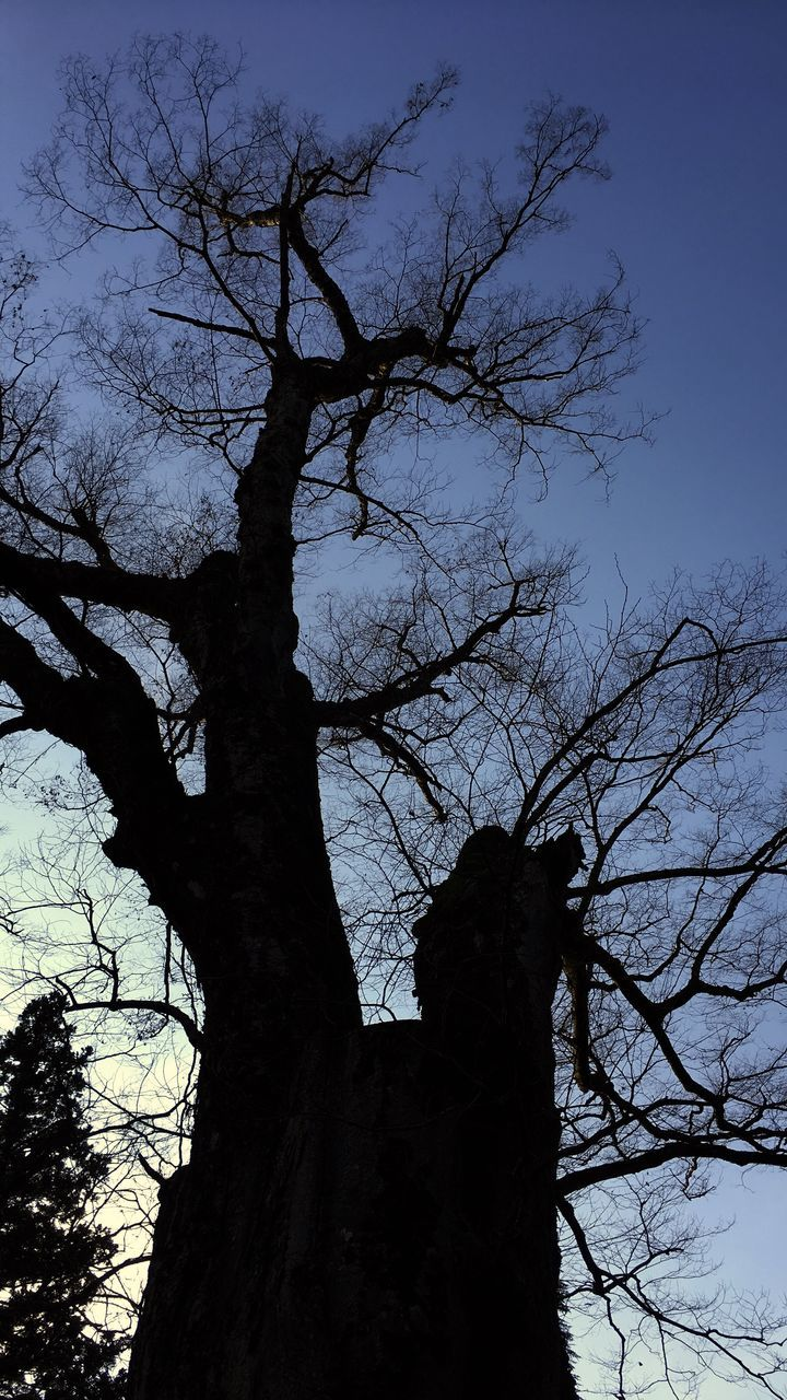 tree, branch, nature, bare tree, silhouette, low angle view, outdoors, sky, no people, beauty in nature, tranquility, winter, tree trunk, day, animal themes, mammal
