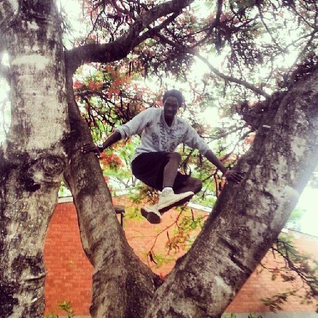 And suddenly I became a monkey.... *yelling like Tarzan does* Tree Scottyzepplin Outdoors Nature