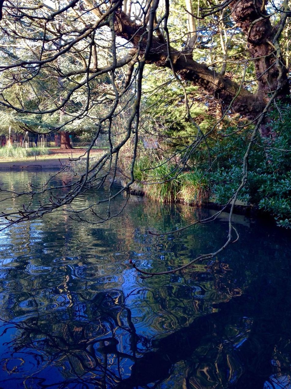 Saturdaymorning Nature_collection Water Gallery Reflection_collection Love Photography Eye4photography  Peaceful