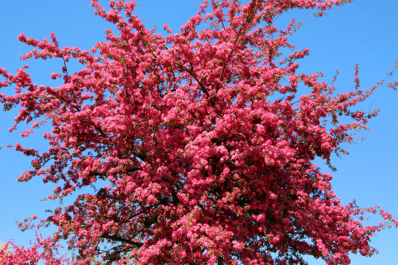 Beauty In Nature Blooming Blossom Botany Branch Clear Sky Close-up Day Flower Flower Head Fragility Freshness Growth Low Angle View Nature No People Outdoors Petal Pink Color Sky Springtime Tree Villach