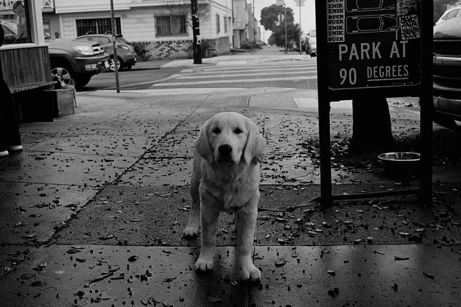 Parking enforcer doge Dog Looking At Camera Film Blackandwhite Ilford Xp2 400 Canonetql17