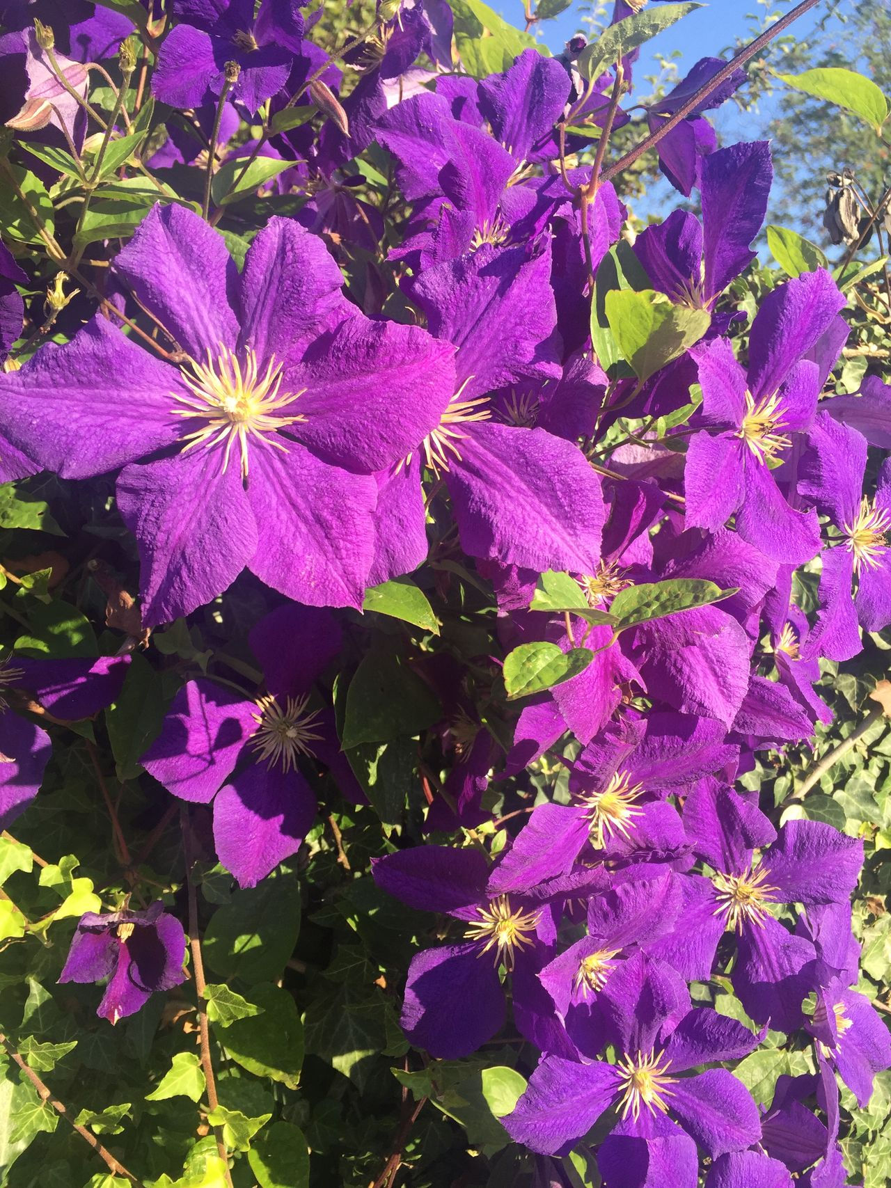 Beauty In Nature Blooming Blume Blüte Day Flower Flower Head Freshness Lila Nature No People Petunia Pflanzen Plant Purple