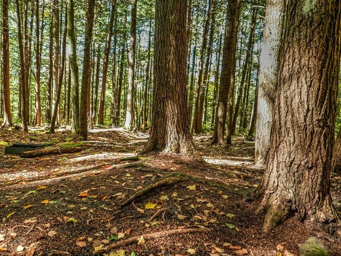 Have you been in the woods yet to that place where you can be among the trees and see fall happening? Trees Nature HDR Fall Fall Beauty Fall Colors A Walk In The Woods Woods The Great Outdoors - 2015 EyeEm Awards The Calmness Within