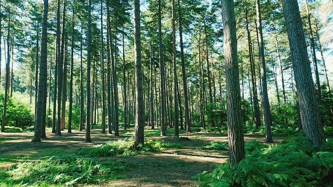 Woods Forest Tree Forest Path Forest Trees Treescape Trees And Nature Trees Trees Collection Treescapes Nature Nature_collection Nature Landscape