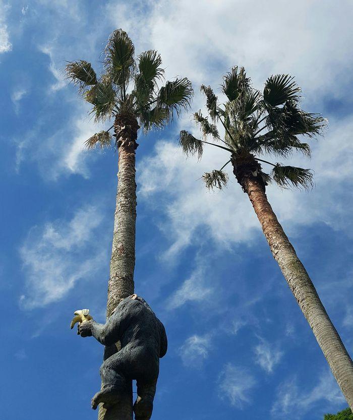 제주도 여행 원숭이 맑음 하늘