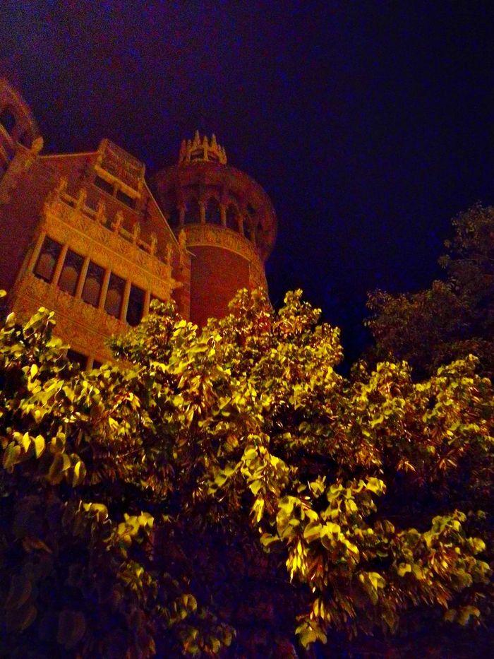 Night History Low Angle View Architecture Sky Tree Astronomy Barcelona Palau Robert