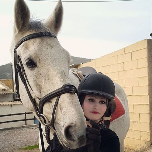 Horse Verybeautiful Verybig Loveyou Lovemyhorse Horsestagram Instahorse Tagsforlikes Horsefollowers Horseaddict Horsegirl Equine Equestrianlife Cheval